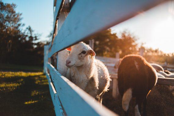 Animals in agritourism